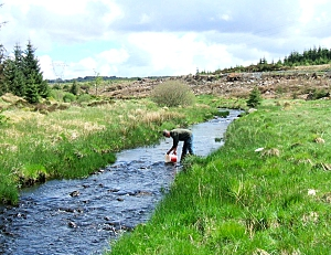 Stocking the River Stinchar
